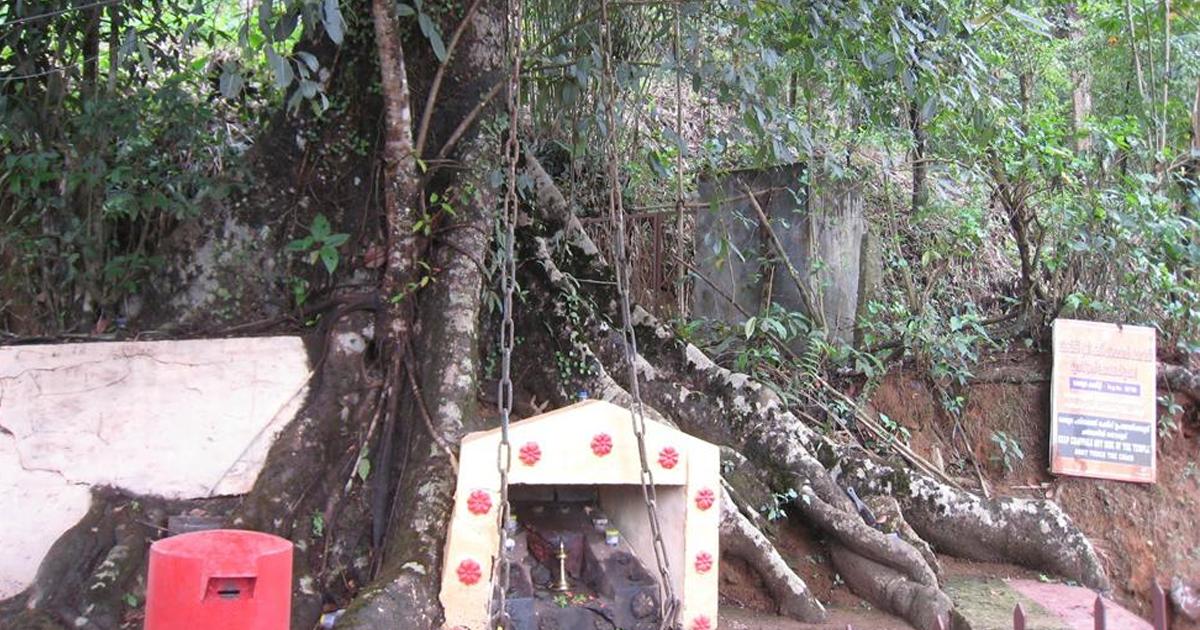 ചങ്ങലമരം ( chain tree)